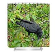 Raven In The Cherry Tree Shower Curtain