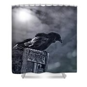 Raven Twilight Shower Curtain