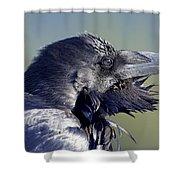 A Raven - Windblown Shower Curtain