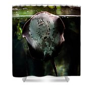 Ray Fish In Paludarium In Zoo Shower Curtain
