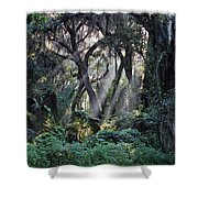 Rays Of Sunlight Shower Curtain