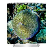 Razor Coral At Pakin Atoll Shower Curtain