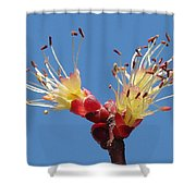 Re-awakening Shower Curtain