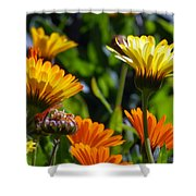 Reach For The Sun 1 Shower Curtain