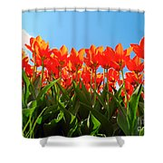 Reach For The Sun. Shower Curtain