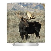 Ready And Waiting Shower Curtain by Sandra Bronstein