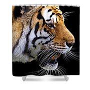 Ready For Lunch Shower Curtain