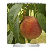 Ready For Picking 2904 Shower Curtain