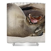 Ready For The Dentist Shower Curtain