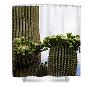Ready To Open Shower Curtain
