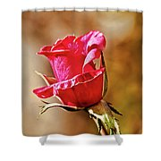 Ready To Pop Shower Curtain
