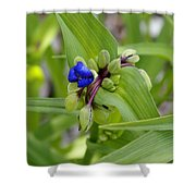 Ready To Rise Shower Curtain