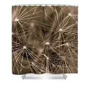 Ready To Seed Shower Curtain
