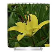 Really Beautiful Yellow Lily Growing In Nature Shower Curtain