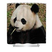 Really Cute Giant Panda Bear With Bamboo Shower Curtain