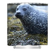 Really Cute Harbor Seal On Seaweed Shower Curtain