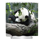 Really Cute Panda Bear Sleeping On A Log Shower Curtain