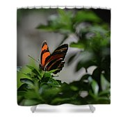 Really Elegant Oak Tiger Butterfly In Nature Shower Curtain