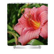 Really Pretty Blooming Pink Daylily In A Garden Shower Curtain
