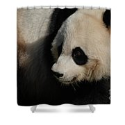 Really Up Close With The Face Of A Giant Panda Shower Curtain