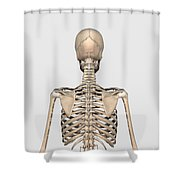 Rear View Of Human Skeletal System Shower Curtain
