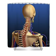 Rear View Of Human Spine And Scapula Shower Curtain