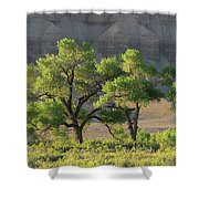 Reawakening  Shower Curtain