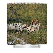 Reclining Cheetah 2 Shower Curtain