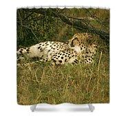 Reclining Cheetah Profile Shower Curtain