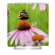 Red Admiral And Cone Flowers Shower Curtain