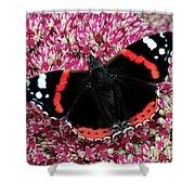 Red Admiral Butterfly Vanesa Atalanta Shower Curtain
