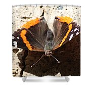 Red Admiral Close Shower Curtain