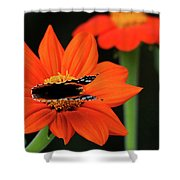 Red Admiral Nectaring On Tithonia Shower Curtain