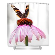 Red Admiral On Echinacea Shower Curtain