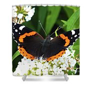 Red Admiral - Topwings Shower Curtain