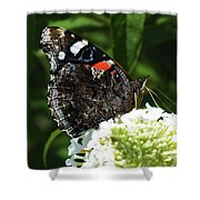 Red Admiral - Underside Shower Curtain