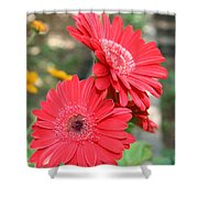 Red Afternoon Shower Curtain