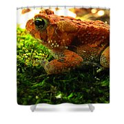 Red American Toad Shower Curtain