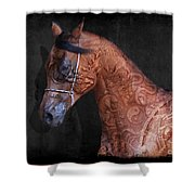 Red Ancient Horse No 01 Shower Curtain
