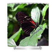 Red And Black Butterfly In The Garden Shower Curtain