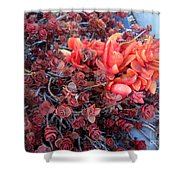 Red And Burgundy Succulent Plants Shower Curtain