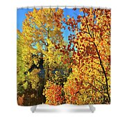 Red And Golden Aspens In Dillon Co Shower Curtain
