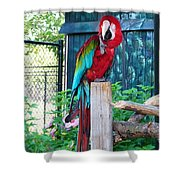 Red  And  Green Macaw         Zoo      Indiana Shower Curtain