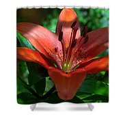 Red And Green No. 2 Shower Curtain