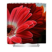 Red And Orange Florals Shower Curtain