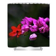 Red And Pink Shower Curtain