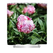 Red And Pink Peony Shower Curtain