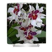Red And Purple Orchids Shower Curtain