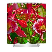Red And White Columbine At Pilgrim Place In Claremont-california Shower Curtain