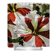 Red And White Petunia Shower Curtain